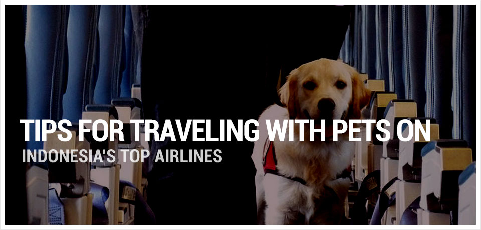 tips travelling with pets